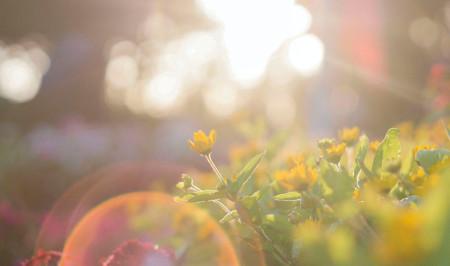 Zonnig weer tijdens een tuinfeest