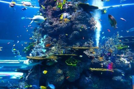 Themafeest idee onderwater